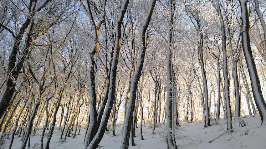 Winter solstice wish