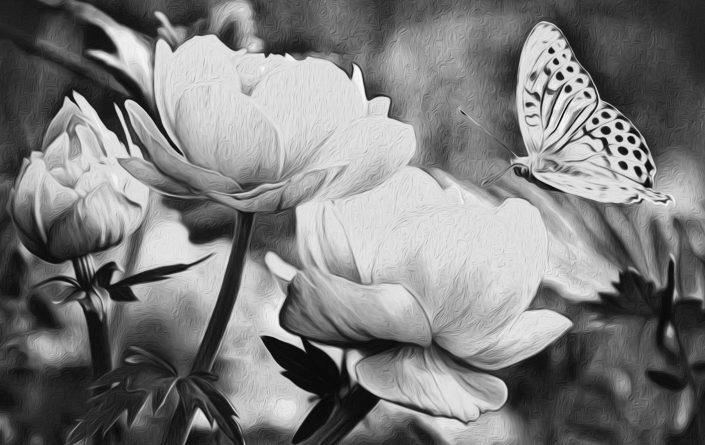 Stephen Davis in svobodni metulji